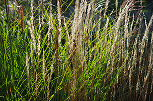David Moulton Toronto Psychotherapist | Picture of Grasses