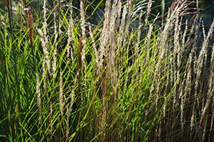 David Moulton Toronto Psychotherapist | Picture of Grasses