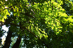 David Moulton Toronto Psychotherapist | Picture of Trees